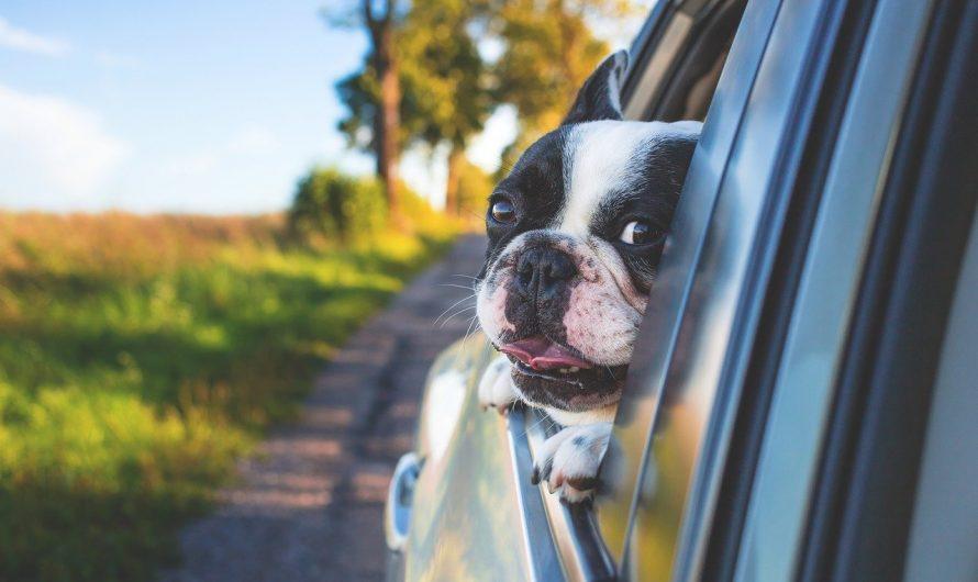 Как путешествовать с животным за рубеж: пошаговая инструкция